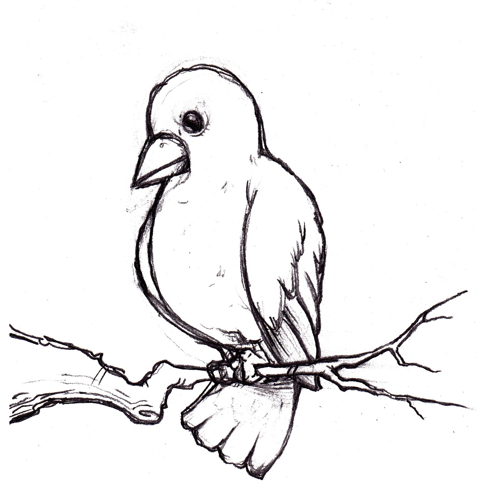 1528x1536 Sketch Image Of Bird Easy And Beautiful Birds Sketches