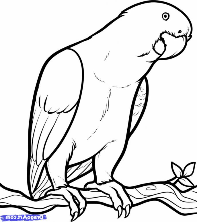 687x773 Coloring Pages Gorgeous Parrot Drawing Text Tattoo Birds