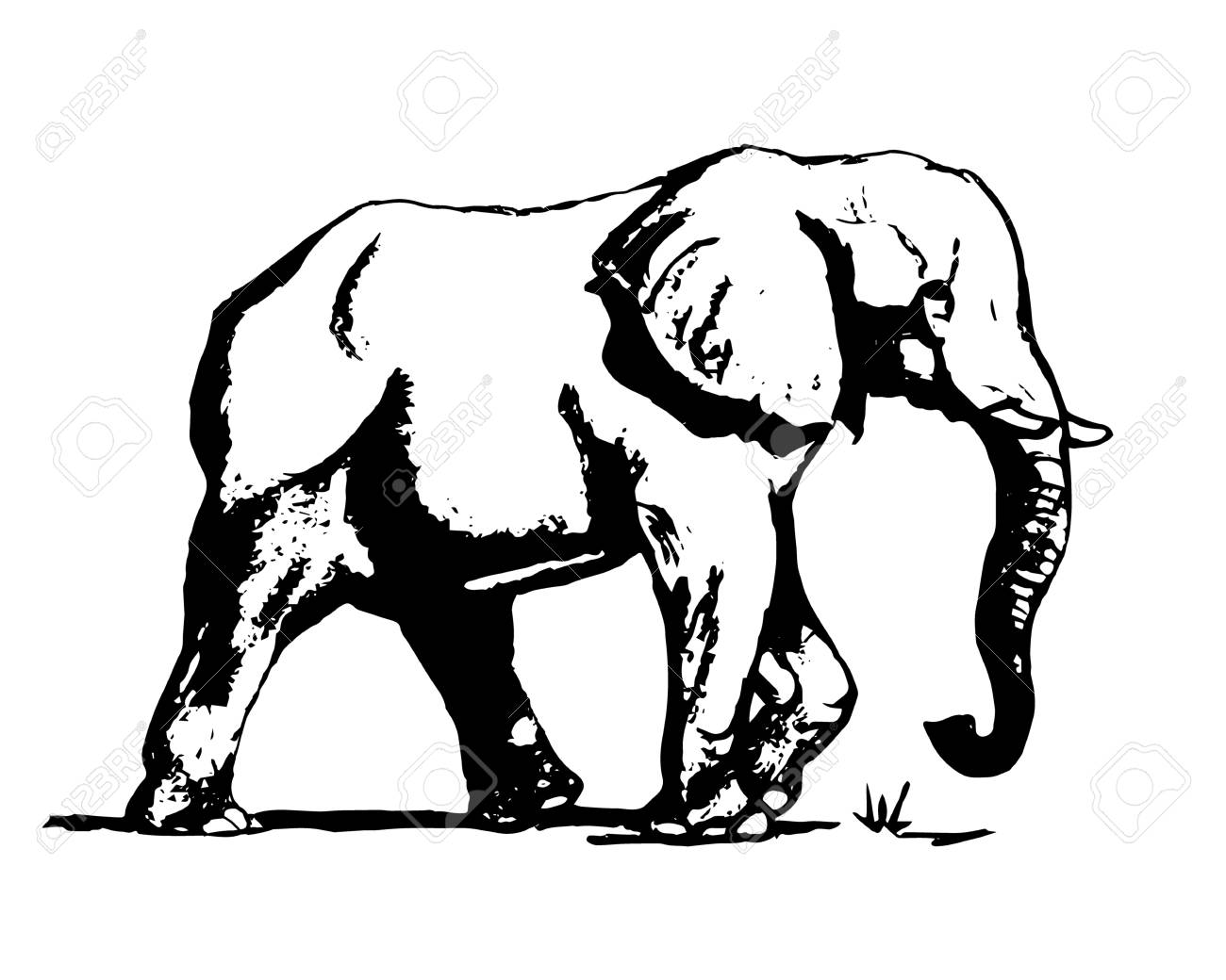 1300x1040 Graphic Image Of An Elephant On A White Background. The Freehand
