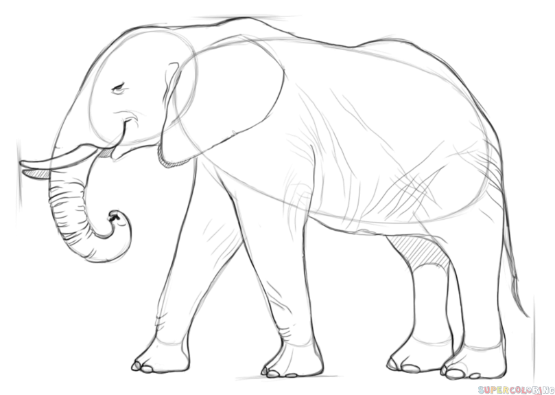 809x575 How To Draw An African Elephant Step By Step Drawing Tutorials