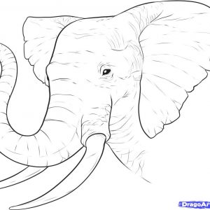 300x300 Online Backup How To Draw Elephant Step Adult