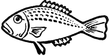 350x180 How To Draw Fish In Easy To Follow Steps Drawing Lesson