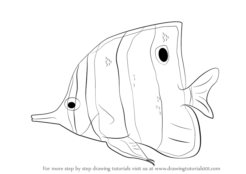 800x566 Learn How To Draw A Butterflyfish (Fishes) Step By Step Drawing