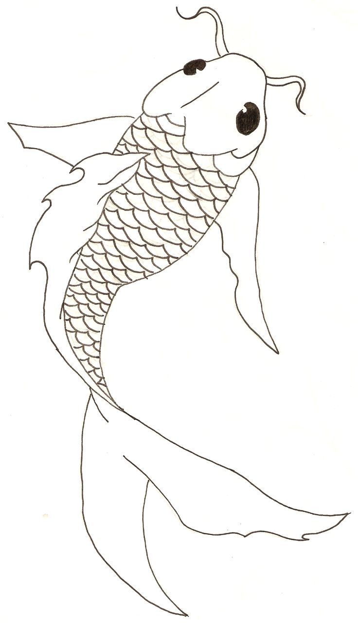 736x1279 Simple Koi Fish Drawing