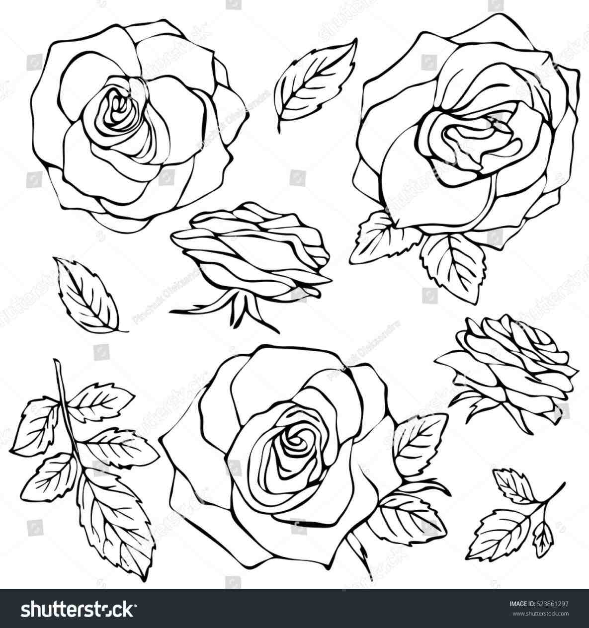 1185x1264 Rose Flower Hd Photos Gallery Clip Art Library Simple Pencil Drawn