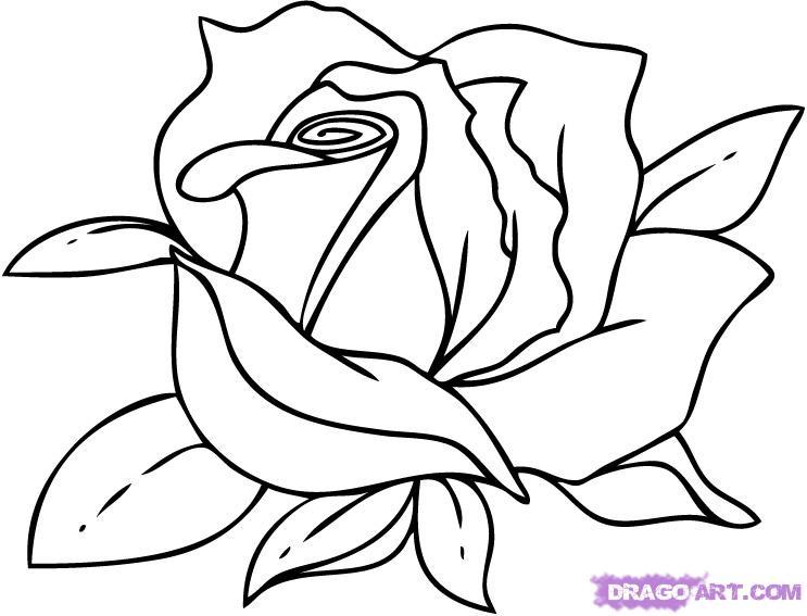 743x567 Flowers Drawings Rose