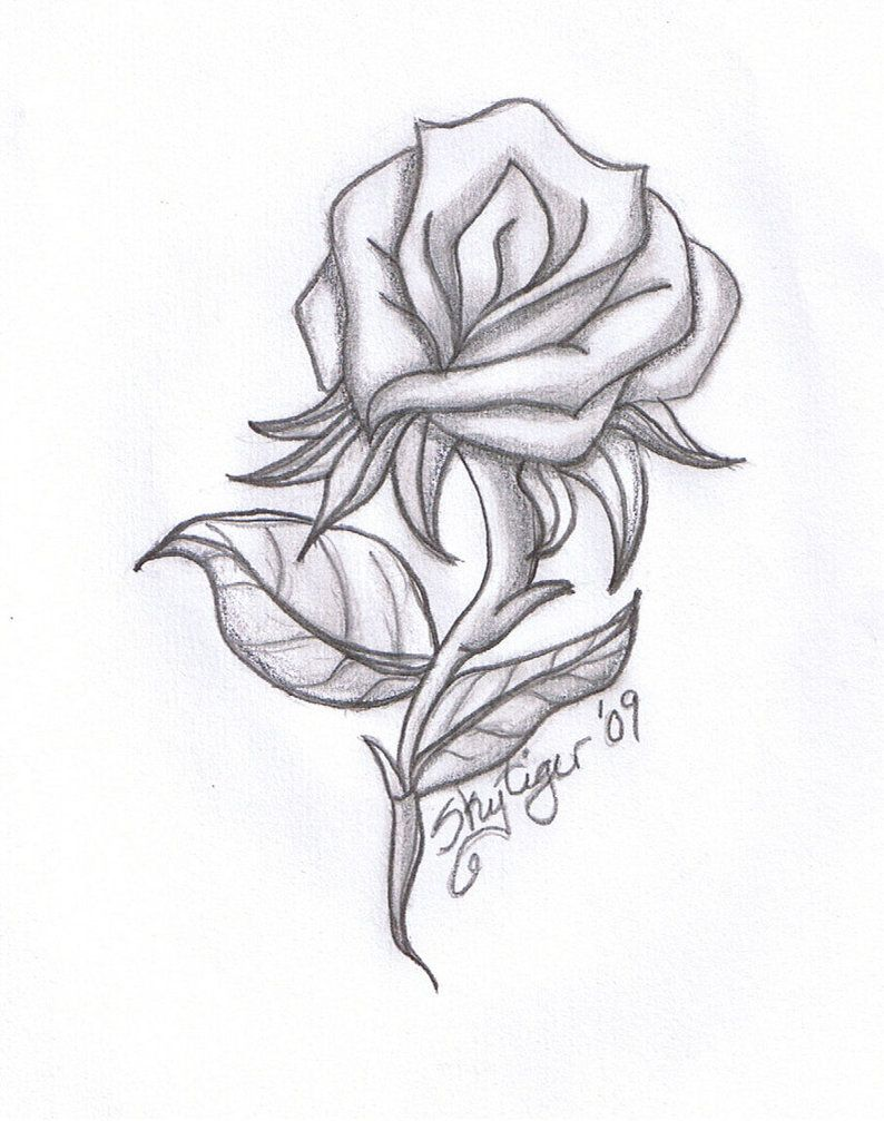794x1007 Pictures Simple Rose Drawings In Pencil For Kids,