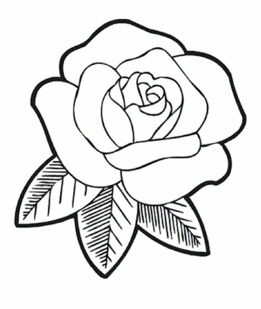 864x1024 Simple Roses Drawings