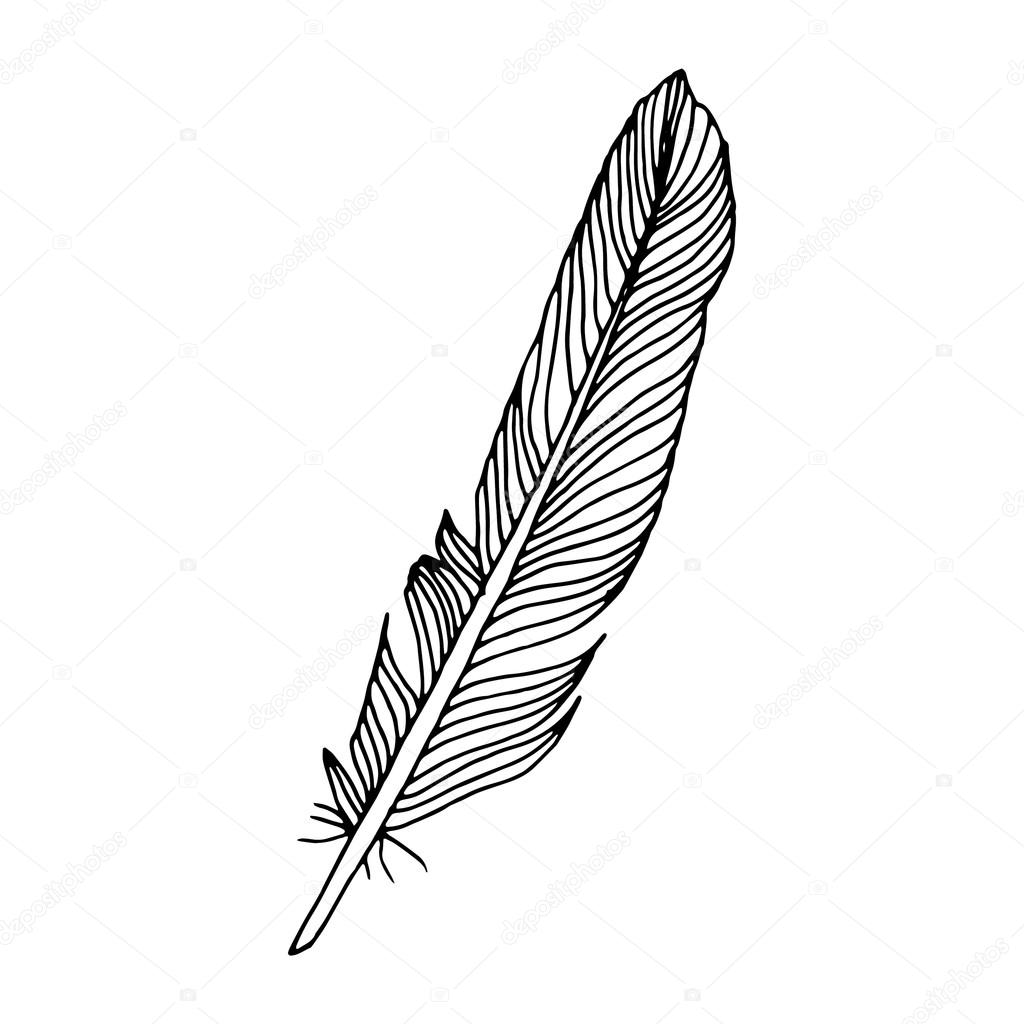 1024x1024 Feathers By Clare Owen Illustration