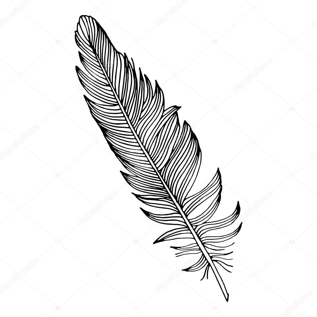 Simple Feather Drawing At GetDrawings