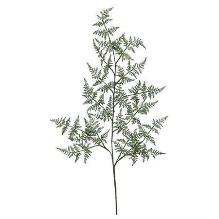 450x450 Cheap Fern Wood Garden, Find Fern Wood Garden Deals On Line