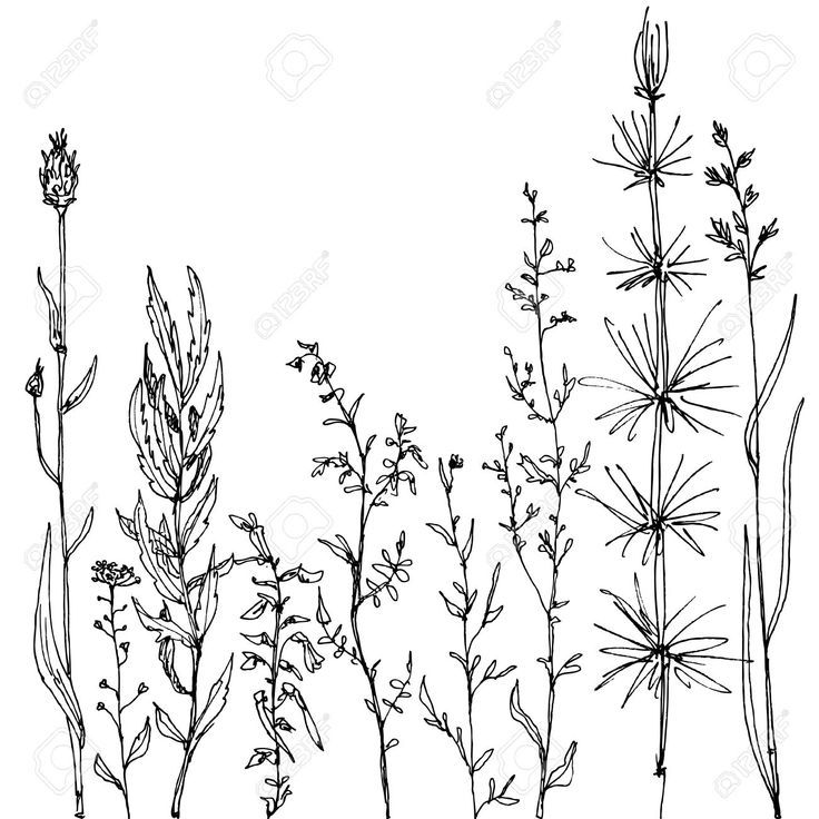 736x736 Wild Flower Floral Composition With Ink Drawing Herbs And Flowers