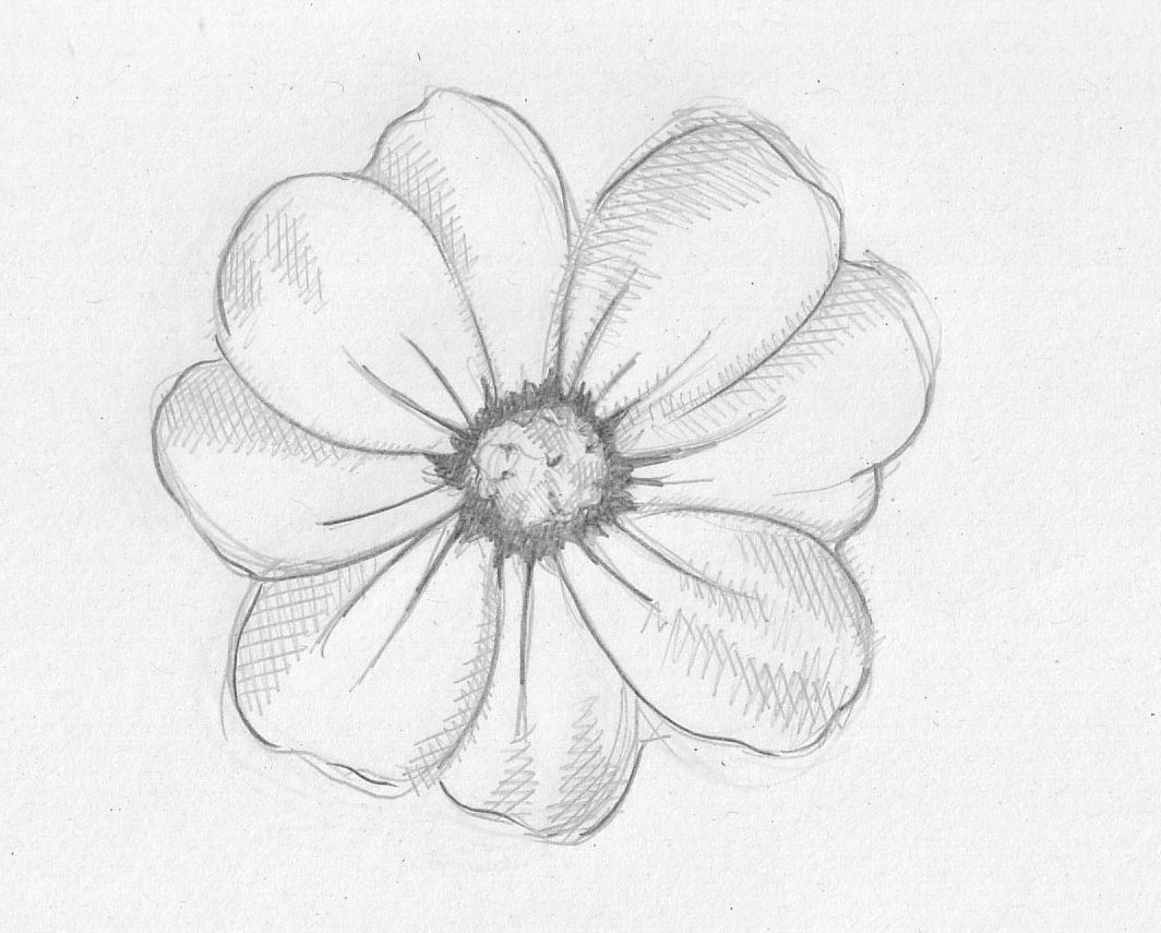 1064x855 Easy Flower Drawing Sketch, Simple Flower Drawings With Color