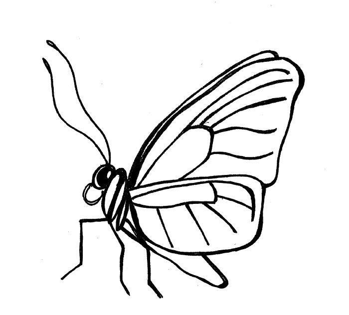 700x632 Simple Insect And Flower Line Drawings Standingoutinmyfield