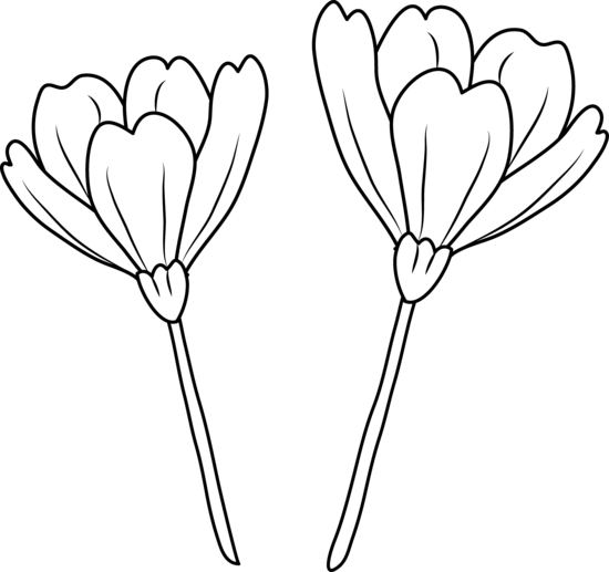 550x517 Flower Line Drawing Clip Art For Free 101 Clip Art