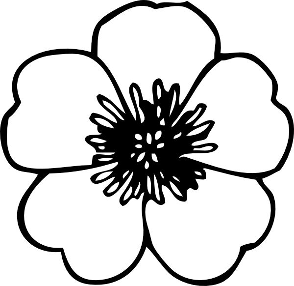 600x582 Pictures Flower Line Drawing Clip Art Free,