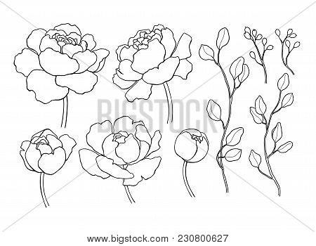 450x350 Simple Flower Outline Images, Illustrations, Vectors