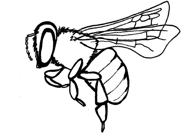 650x464 Simple Insect And Flower Line Drawings Standingoutinmyfield