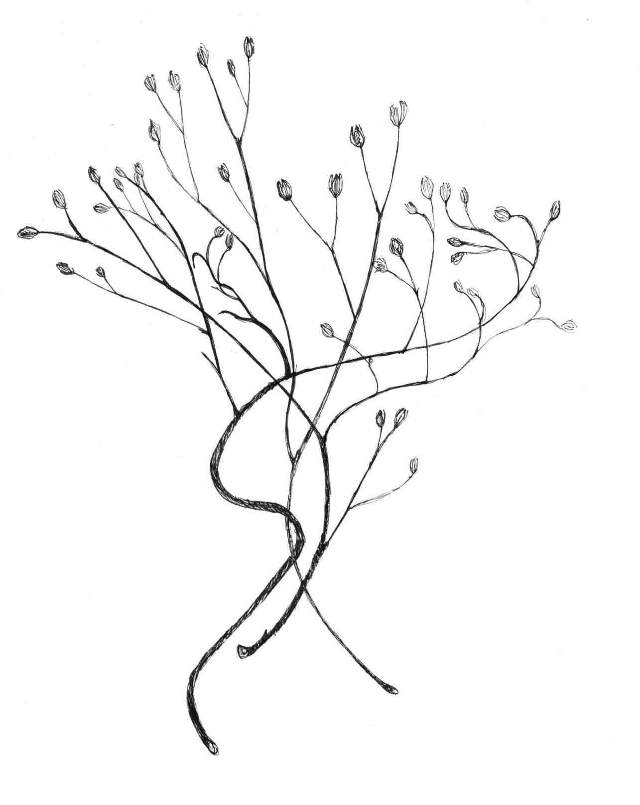 1285x1618 Flower Line Drawings