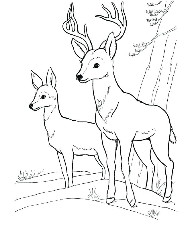 Simple Forest Drawing With Animals At Getdrawings Com Free For