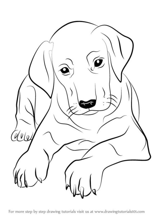 600x849 Pictures A Simple Drawing Of A Dog,