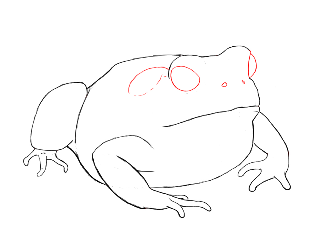 1056x792 How To Draw A Toad Toad, Paper Drawing And Drawings