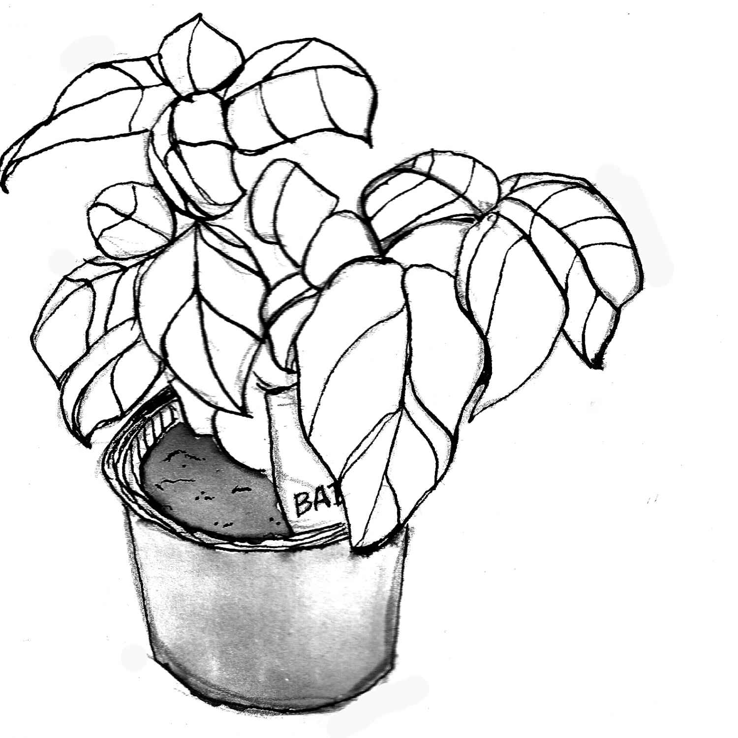 1500x1500 Simple Plant Drawings Simple Plant, Simple Plant Drawing