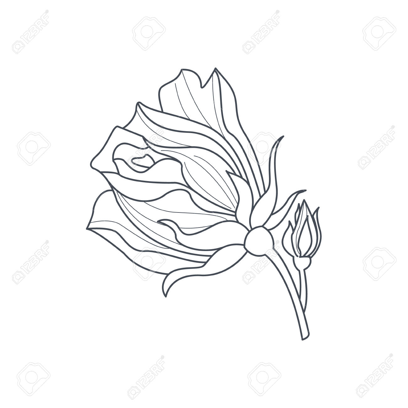 1300x1300 Simple Rose Bud Drawing Rose Bud Monochome Drawing For Coloring
