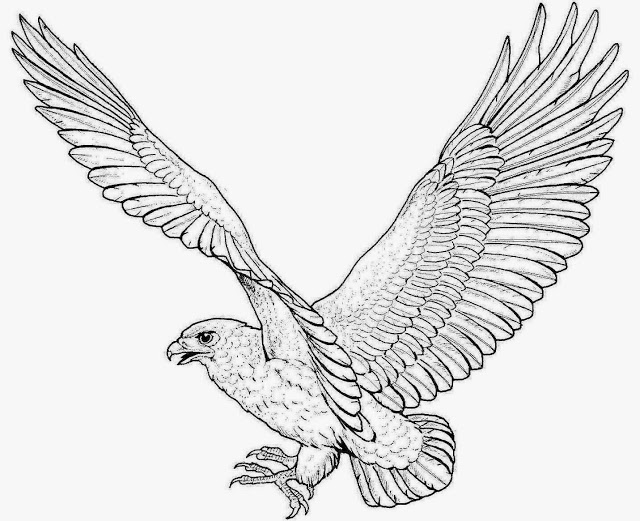 640x521 Colour Drawing Free Wallpaper Eagle Coloring Drawing Free Wallpaper