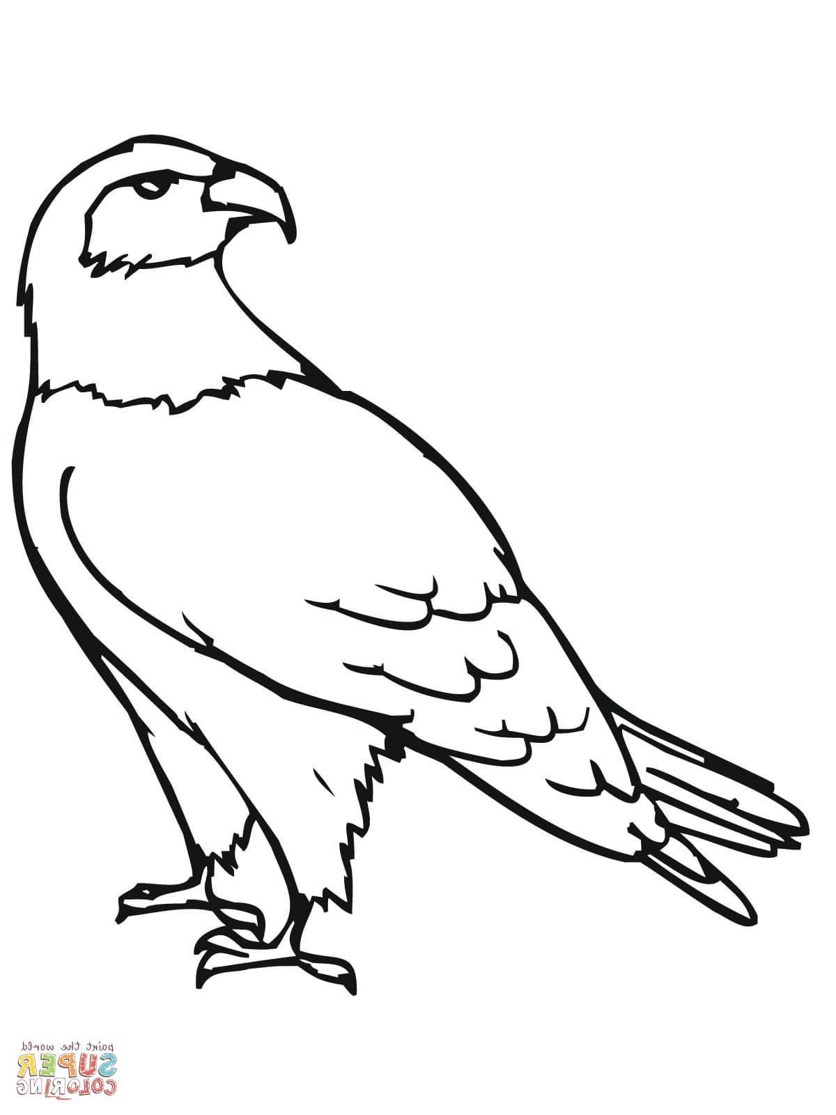 1200x1600 Saatchi Art Artist Gary Wilcockson Drawing Red Tail Hawk Art. Hawk