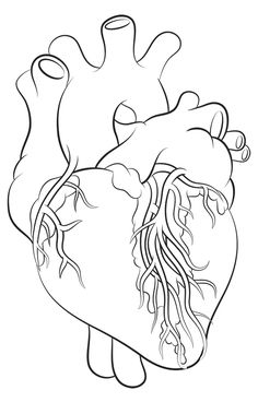 236x368 How To Draw A Human Heart 5 Steps (With Pictures)