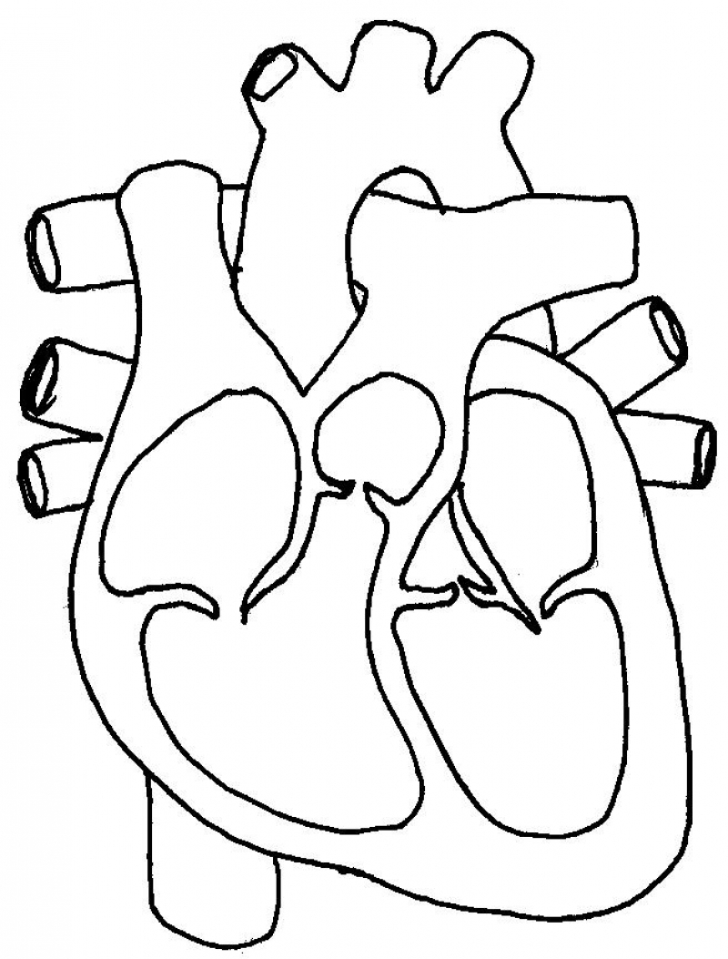 800x1053 Simple Heart Diagram With Label Line Draw Heart Diagram To Label