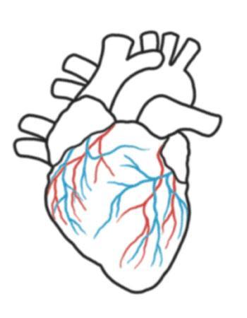 350x450 Simple Human Heart Drawing