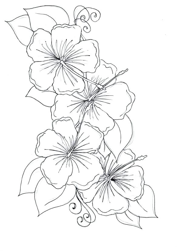 600x826 Hibiscus Flower Coloring Page Hibiscus Flower Drawing Coloring