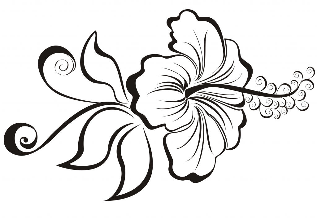 1024x723 Hibiscus Flower Drawing Simple Hibiscus Flower Drawing