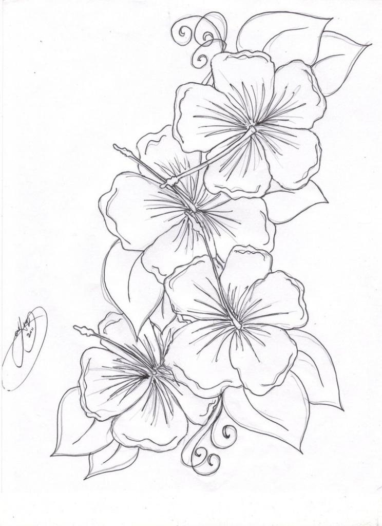 744x1024 Hibiscus Flower Drawing Step By Step Must Watch Learn How To Draw