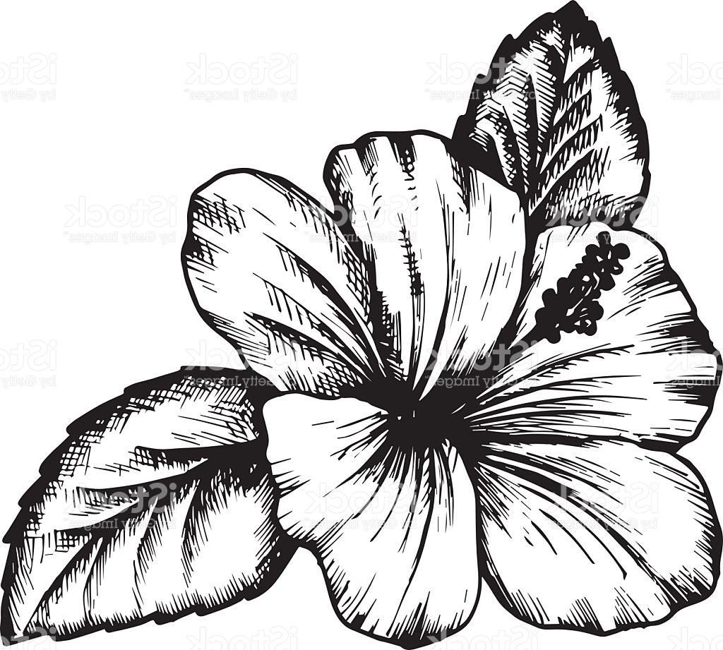 1024x921 Hibiscus Flower Line Drawing