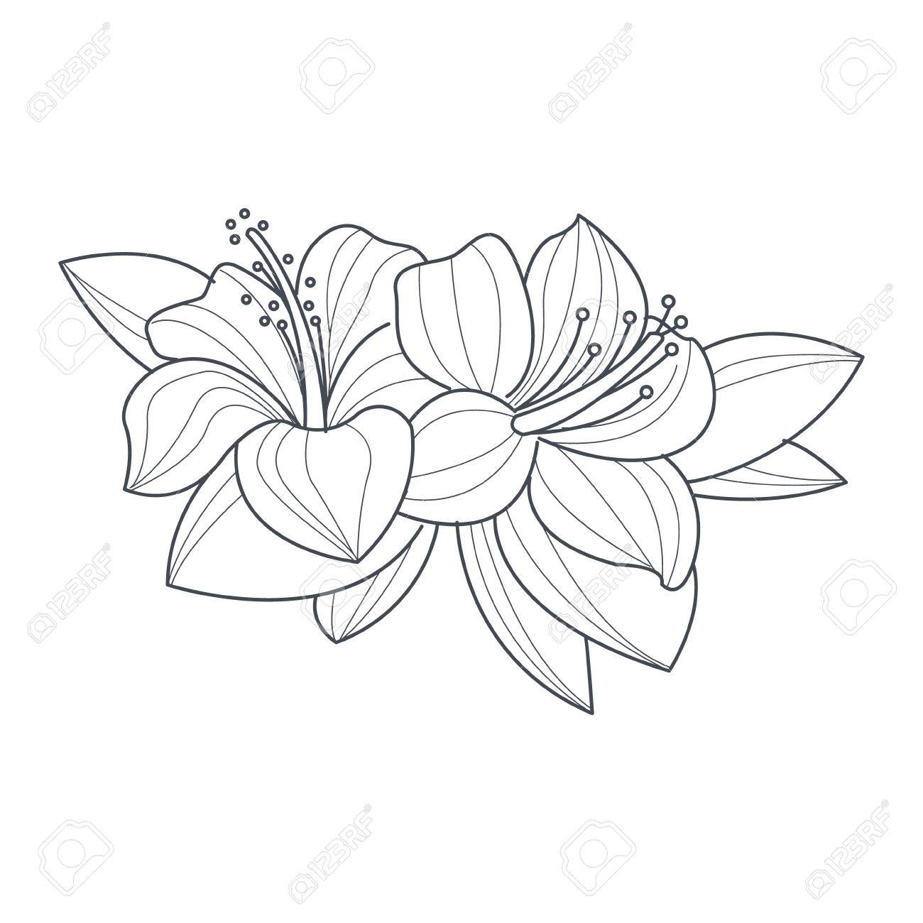 1300x1300 Hibiscus Flower Monochrome Drawing For Coloring Book Hand Drawn