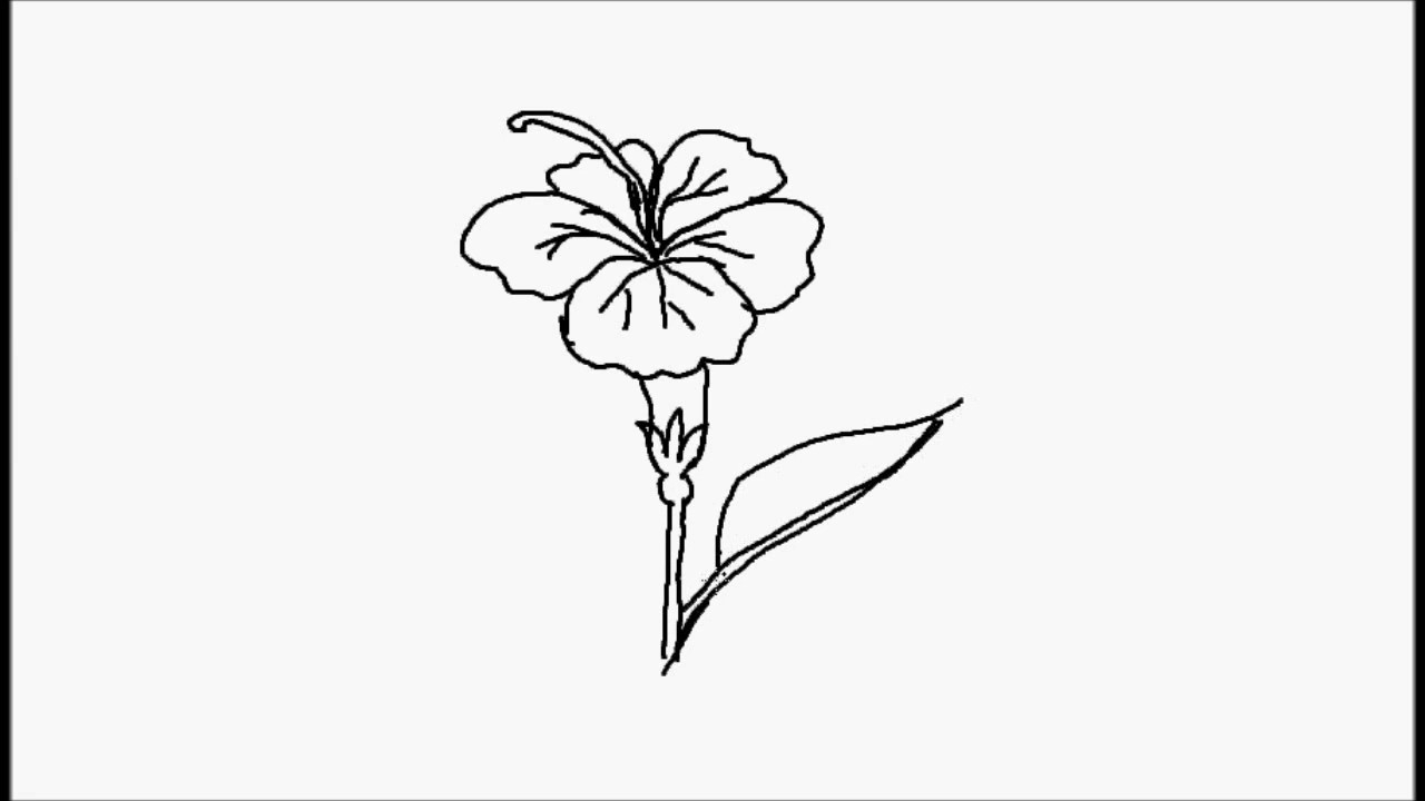1280x720 Simple Drawing Hibiscus Flower How To Draw Hibiscus Flower
