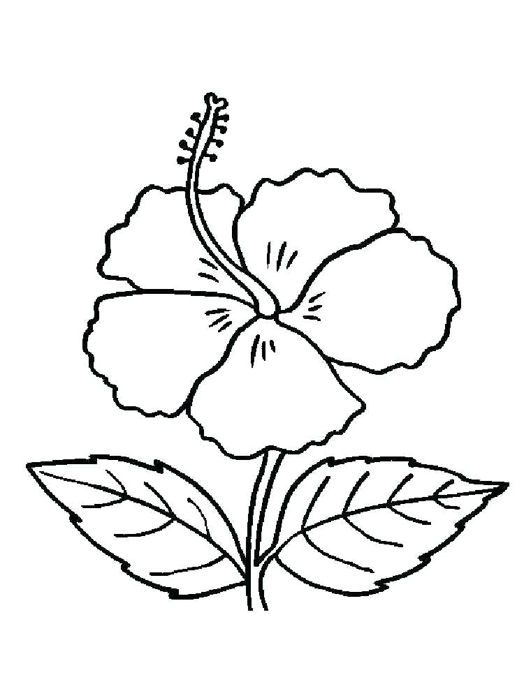 750x1000 Hawaiian Hibiscus Coloring Page Coloring Collection