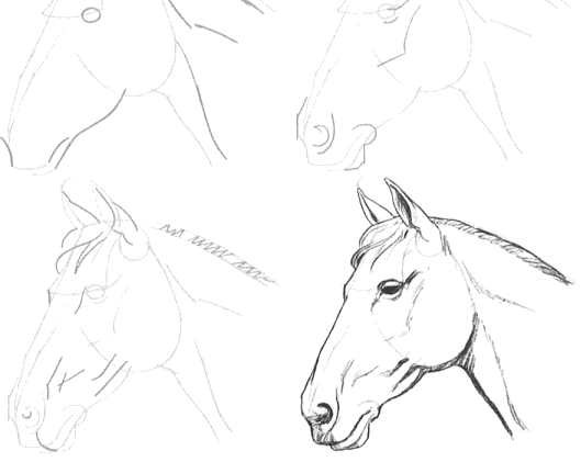 529x421 how to draw horses tutorials online drawing lessons