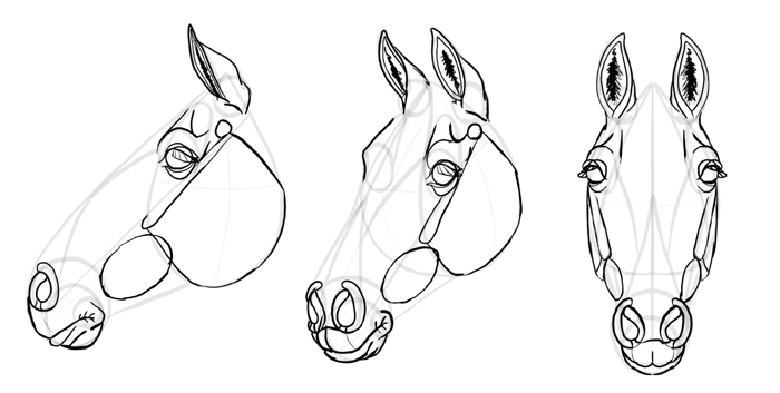 how to draw a horse head step by step realistic