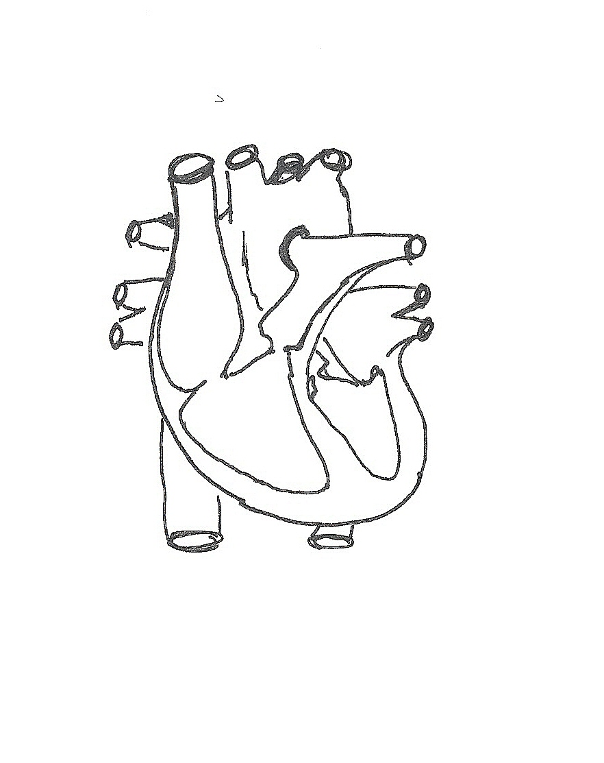 blank diagram of the circulatory system