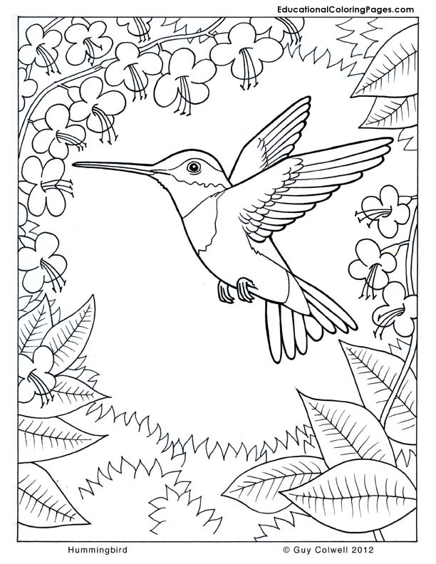 612x792 Hummingbird Coloring Pages