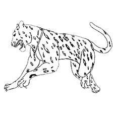 Simple Jaguar Drawing