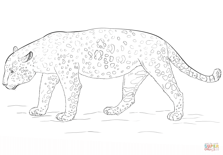 Jaguar Auto Ausmalbilder : Simple Jaguar Drawing At Getdrawings Com Free For Personal Use