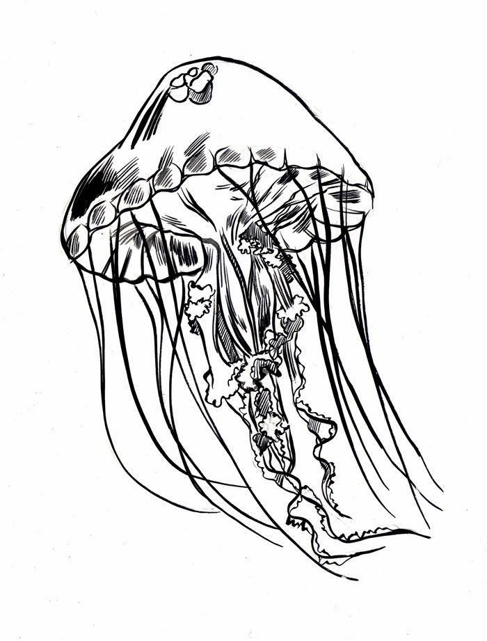 Simple Jellyfish Drawing at GetDrawings.com | Free for personal use ...