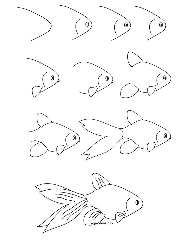 736x981 Fish Drawing Step By Step