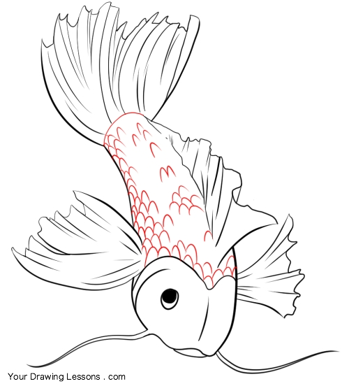 500x552 How To Draw A Koi Fish Your Drawing Lessons