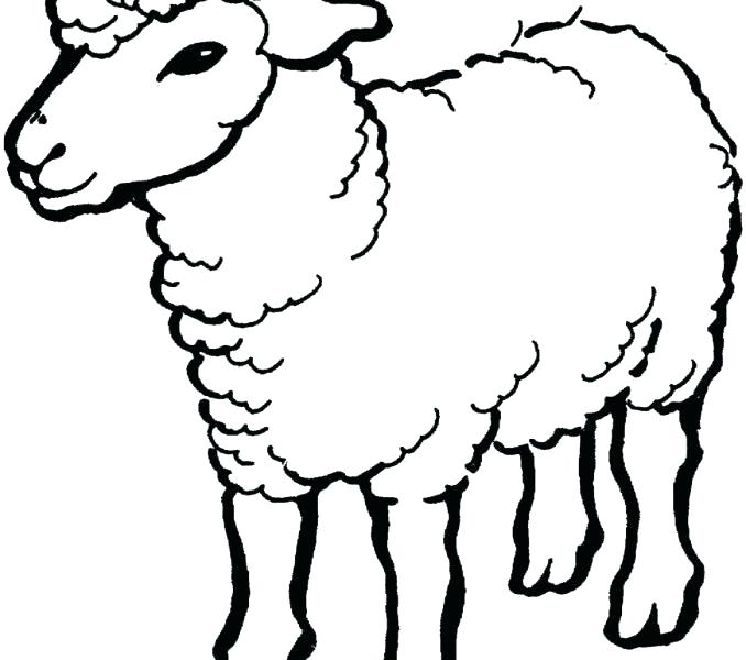678x600 Lamb Coloring Page Sheep Drawing For Kids Lamb Coloring Page Lamb